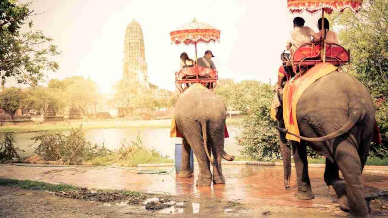 turismo-elefanti