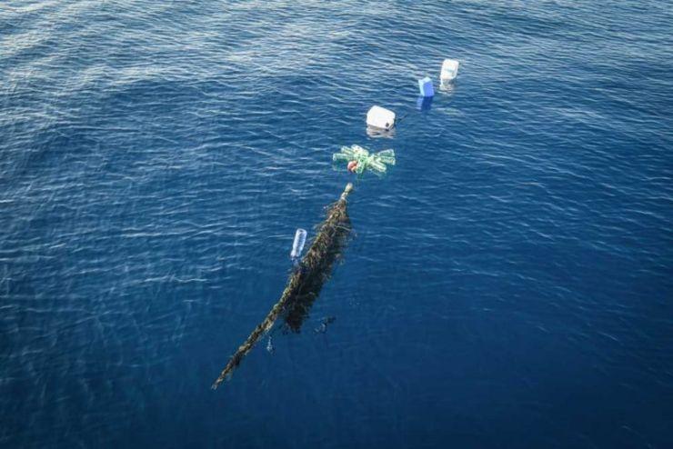 fad pesca illegale