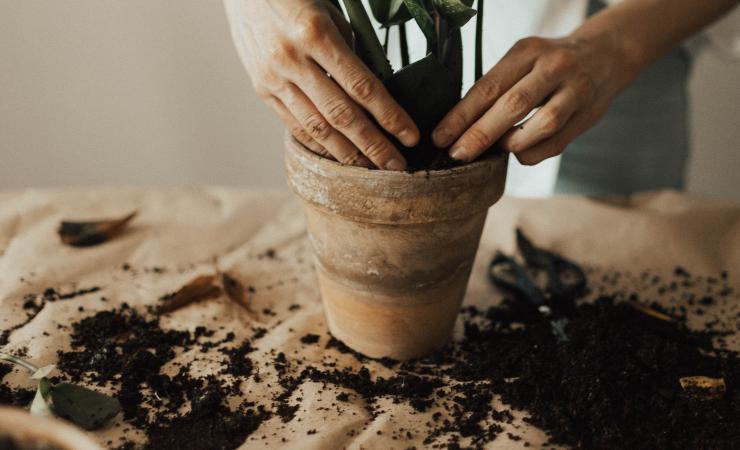 giardinaggio con caffè