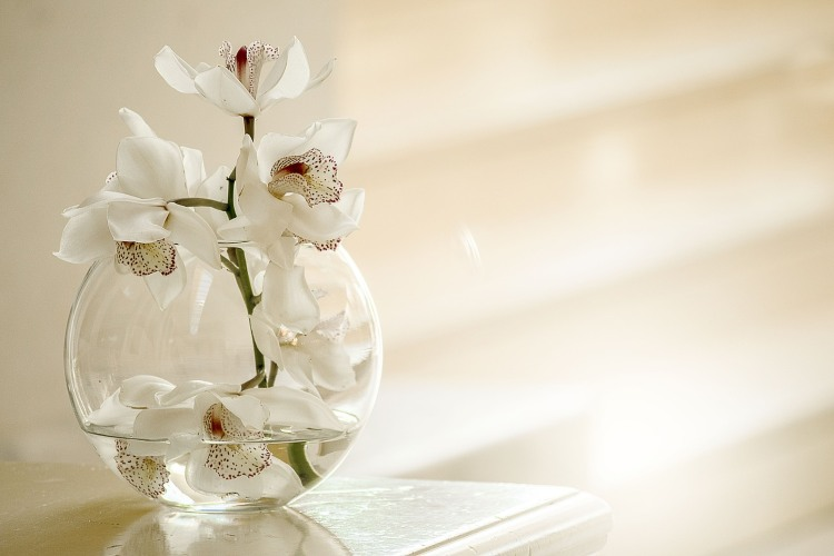 orchidea ufficio piante