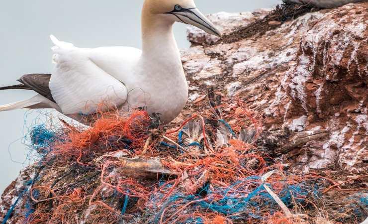 rete pesca uccello