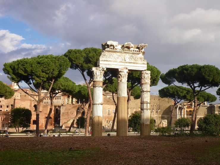 Roma pini