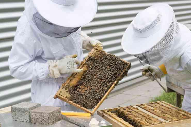 apicoltore