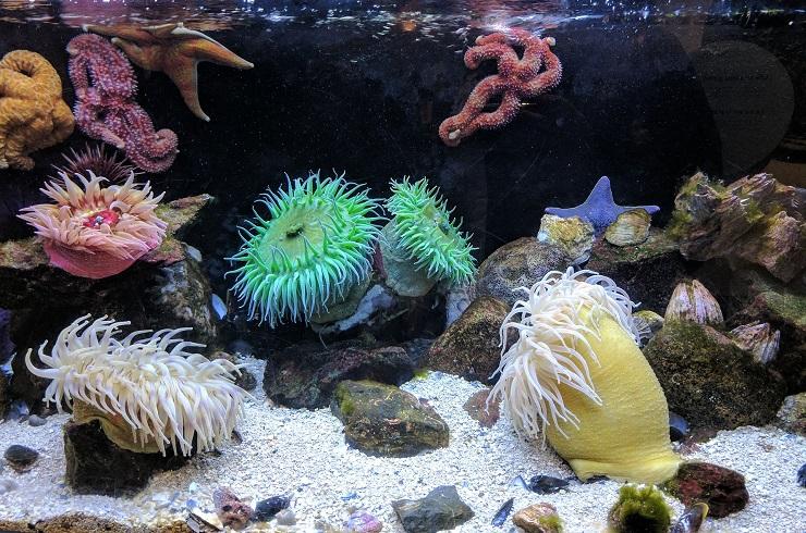 corallo mare