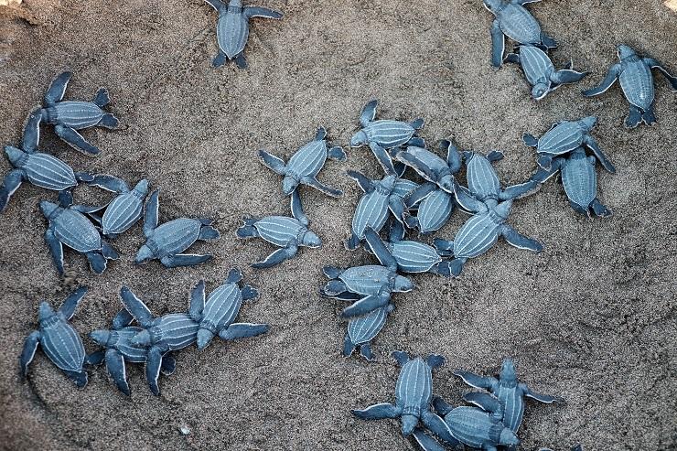 tartarughe marine cuccioli