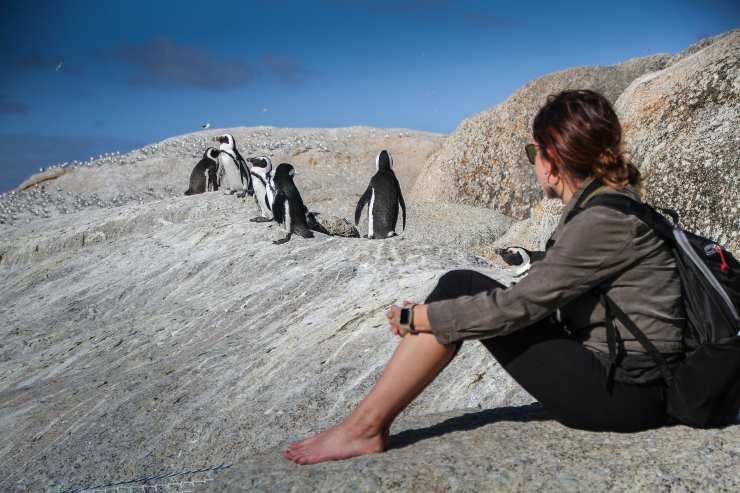 ecoturista pinguini