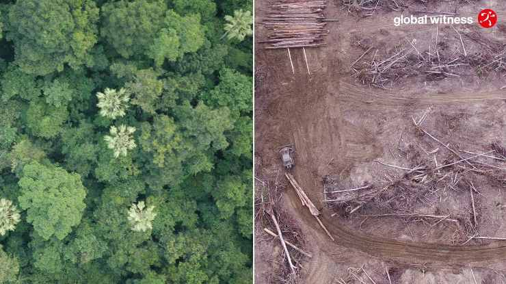 deforestazione global witness