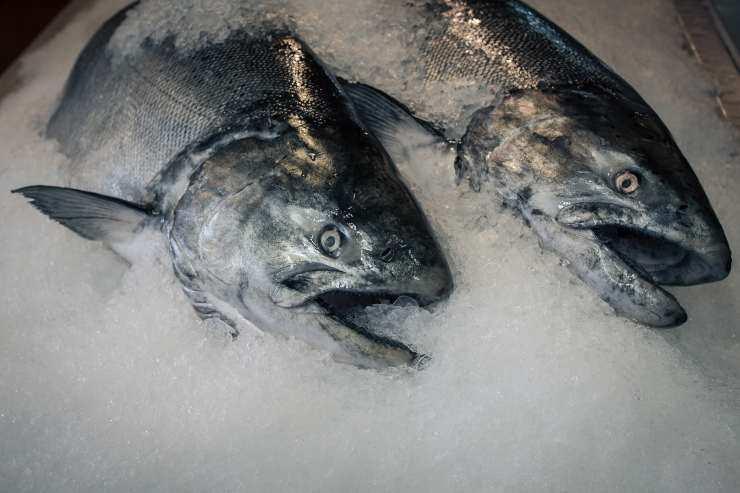 pesce congelato