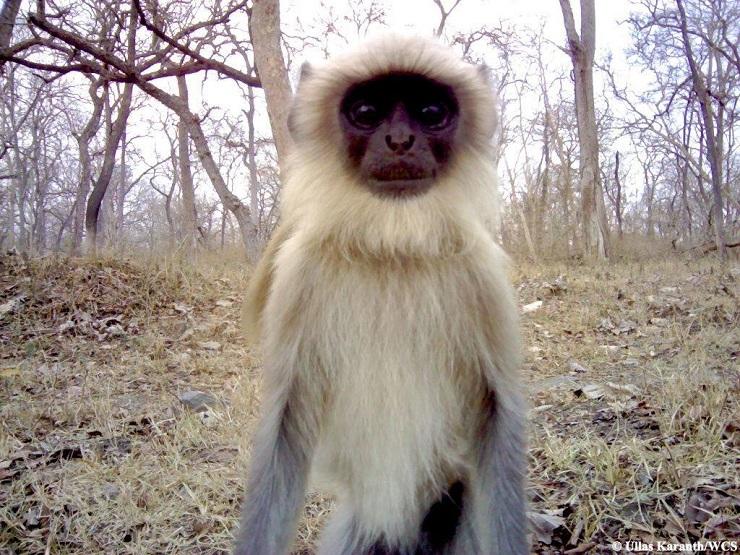 selfie scimmia india