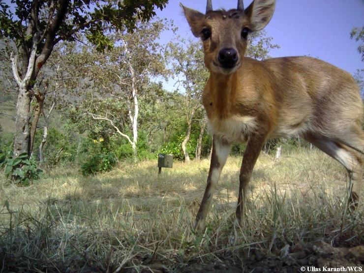 selfie antilope india