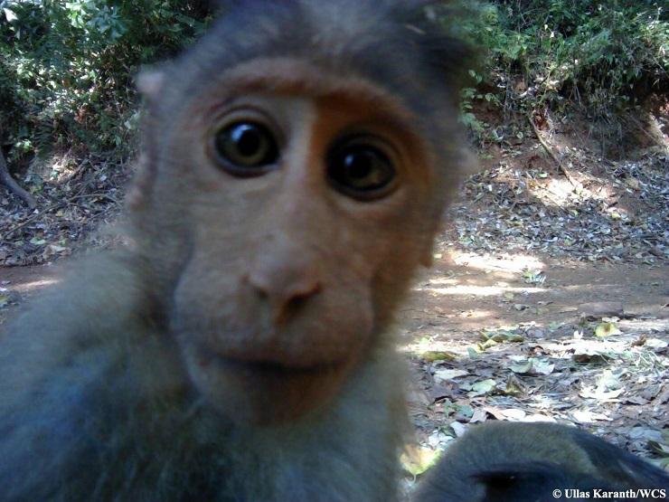 selfie macaco india