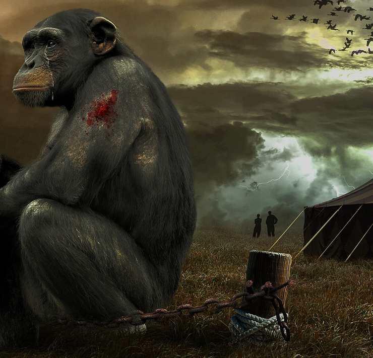 Circo con gli animali: ecco perché non dovresti andarci mai più